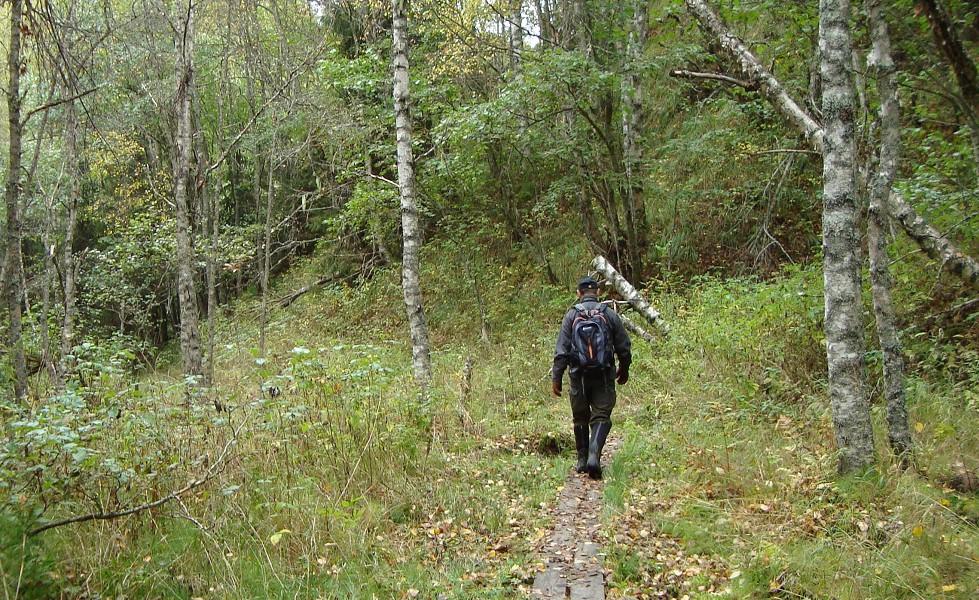 Halgåleden, vandrare på spångad stig