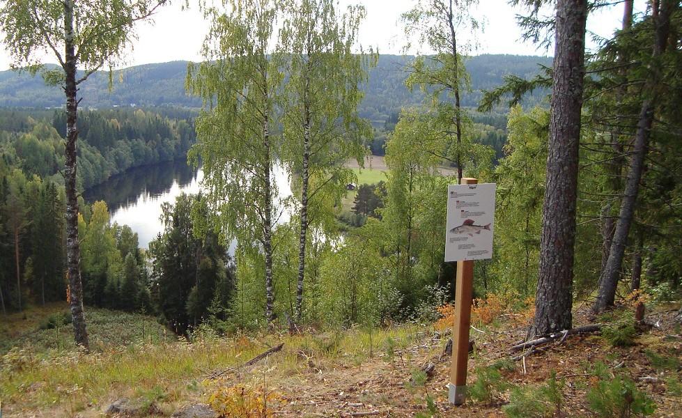 Halgåleden, utsikt över Klarälven