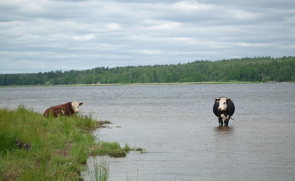 Jäveröleden, ko i Vänern