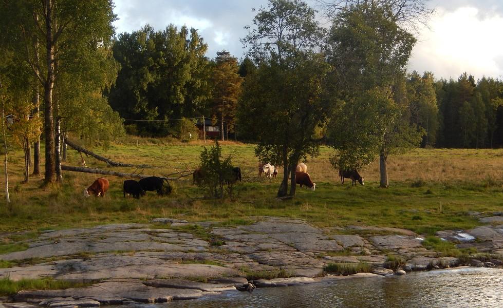Jäveröleden Naturbetesmark Smörhall